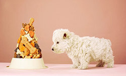 They might be small, but your pets can end up costing you big if you aren't careful.