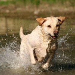 Be sure to keep your pet cool on those hot summer days.