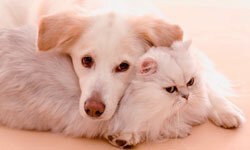 Follow these steps to remove pet stains.