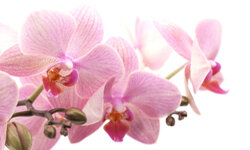 Orchids make an elegant and sophisticated addition to any indoor space.
