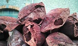 grape skins