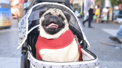 Interactive Database of NYC Dog Names Provides Endless Distraction