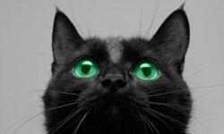 Black cats' association with the devil was bad news for the women whose paths they crossed.