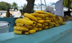 Many banana-bearing boats used to sink, and the association gave rise to a longstanding superstition.