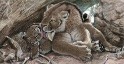 Saber-tooth Kittens Were Big-boned