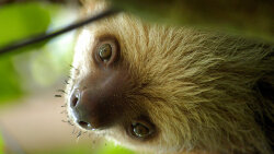 Sloths Only Poop Once a Week — But They Make It a Good One