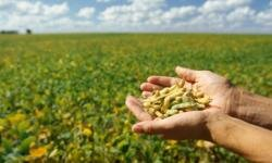 Soybeans like these can be made into a myriad of products.