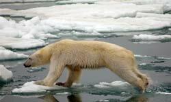 The Arctic Preservation Dome will save polar bear habitats.