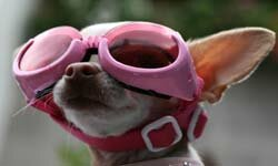 This adorable pooch is sleeping while awake with REM goggles.