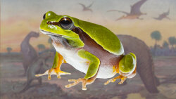 Dinosaur Extinction Allowed Frogs to Flourish