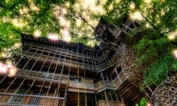 Minister's Treehouse