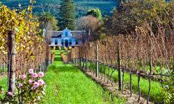 A winery in Cape Dutch, South Africa