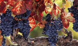 Napa Valley, Calif., is a popular wine destination.