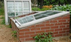 If you want to build a sturdier type of cloche, you might want to invest in a cold frame.