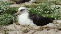 Wisdom, the World's Oldest-known Bird, Lays Another Egg