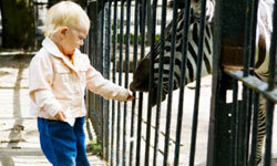 Why not take the family to the local zoo? See more family vacation pictures.