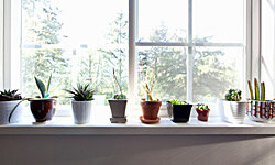 Proportion is a pretty simple concept: Little plants belong in little containers.