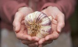 Garlic -- the main ingredient.