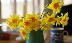 Use a potato to position your flower arrangement.