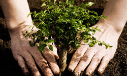 Planting a tree is a classic -- and helpful -- way to celebrate Earth Day.