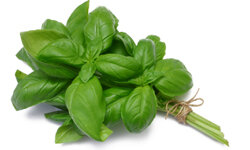 Sweet basil is a popular flavoring agent in many tomato-based sauces.
