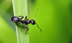 Ants belong outside -- far away from your house.