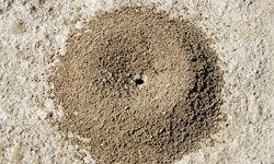 Pay particular attention to mounds like this one.