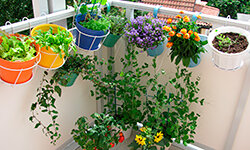 Inexpensive changes – like growing your own herbs – can have a big environmental impact.