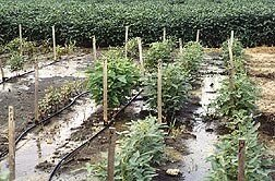Flood-tolerant soybeans from southeastern China