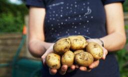 10 Ways to Use a Potato