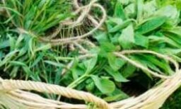 How to Use Herbs for Health Purposes