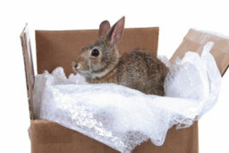 5 Tips for Moving Pets