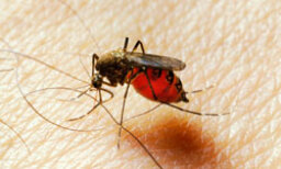 Treating Insect Bites with Aromatherapy
