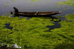 5 Ways to Use Algae for Fuel