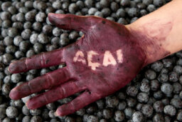 Acai Superfood Diet: What You Need to Know