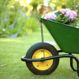 Allergen-free Gardens