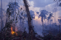 What if the Amazon rainforest was completely destroyed?