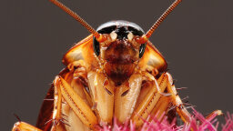 Do Flying Cockroaches Target Your Face, or Does It Just Feel That Way?