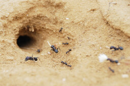 Common Locations for Ant Nests
