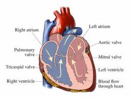 What's aortic valve disease?