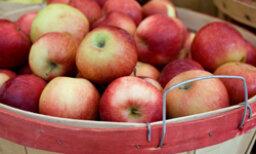 5 Autumn Apples