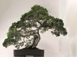 What's the difference between bonsai and topiary?