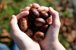 Why is a buckeye seed in your pocket good luck?