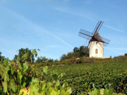 Ultimate Guide to the Burgundy Wine Region