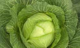 Cabbage: Natural Weight-Loss Food