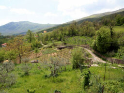 Ultimate Guide to the Calabria Wine Region