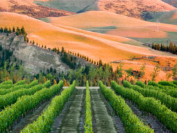 Ultimate Guide to the Canterbury Wine Region