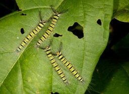 How Caterpillars Work