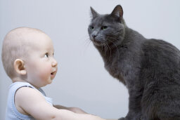 Do cats really steal babies' breath?