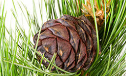 5 Decorative Ways to Scent Your Home with Cedar